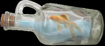 bouteille à la mer du vieux port de Marseille avec un poisson magique, spectacle de magie autour de la mer méditerranée